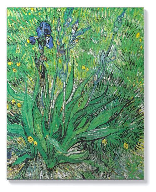 Винсент ван Гог – Ириси 2