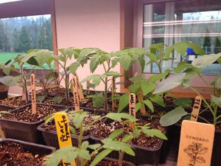 Seeds + soil + teacher collaboration= growth for everyone!