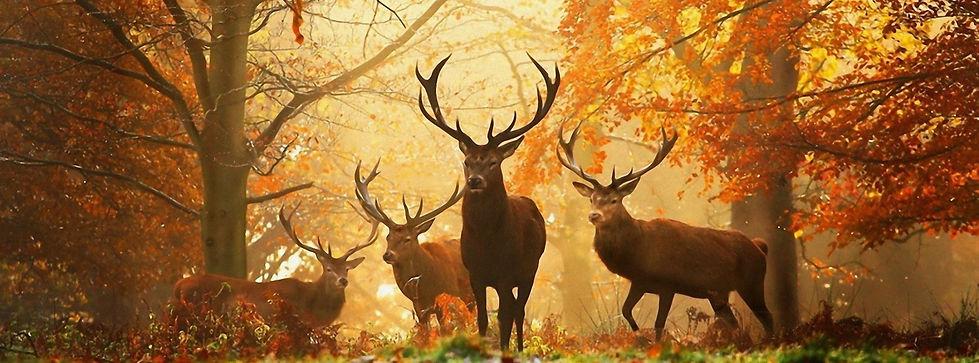 Wald-Tiere-Hirsch-Leonid-Afremov-Antelop