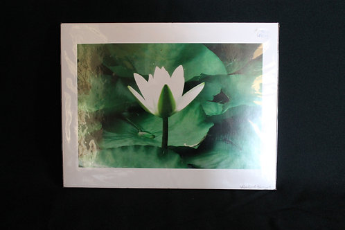 Flower Photography Print