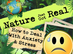 How to Deal With Anxiety & Stress!