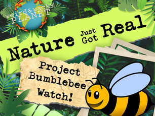 How to Track Bumblebees for Science
