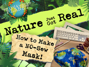 How to Make a No-Sew Face Mask!
