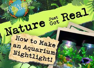How to Make an Aquarium Nightlight!