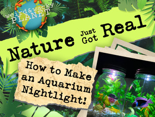 How to Make an Aquarium Nightlight!