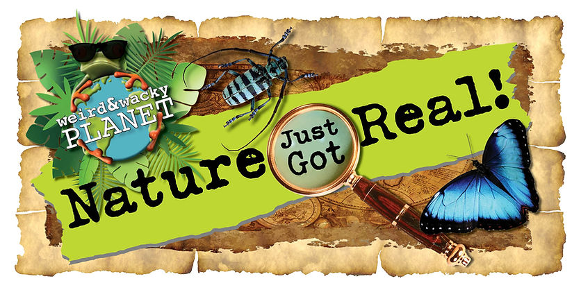 NJGR banner3.jpg