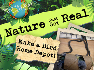Make a Bird Home Depot!