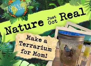 Make a Terrarium for Mom!