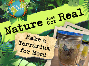 Make a Terrarium for Mom!
