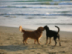Dogs on the beach