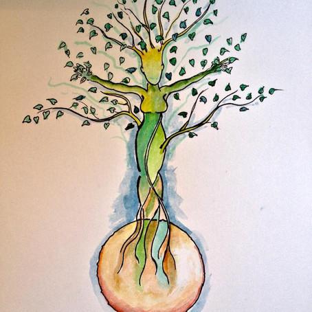 Inicia la 43 campaña anual de reforestación de Na Bolom