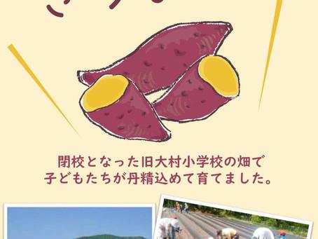 大村のサツマイモ 詰め放題 はじめました!