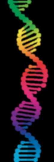 DNA streng WEBSITE.png