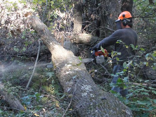 Dave Cutting Oak.jpg