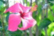 fea023874cf5ea9cc53e0999f25e7e61_s.jpg