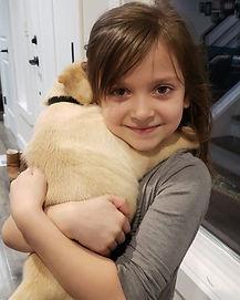 labrador puppy, yellow lab