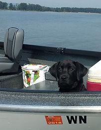 Black Labrador Dog on a Boat