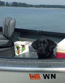 Black Labrador Dog on a Boat