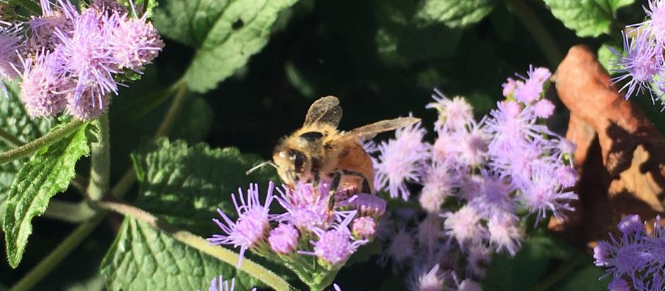 What Happens When We Lose One Species of Pollinators?