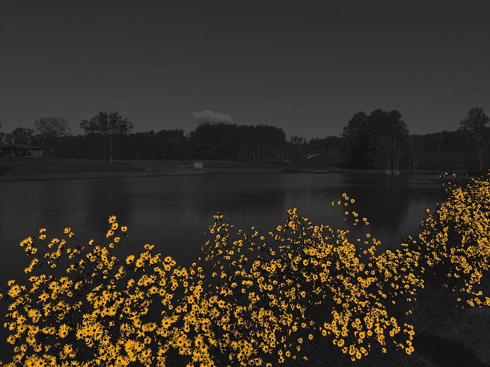 Flowers B&W3.jpg