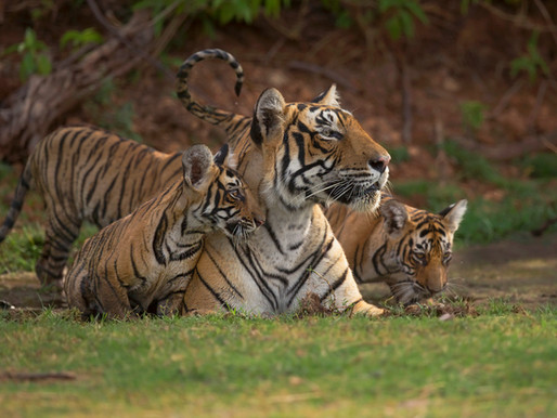 Tiger Range Nations: A Clarion Call for Future Cooperation