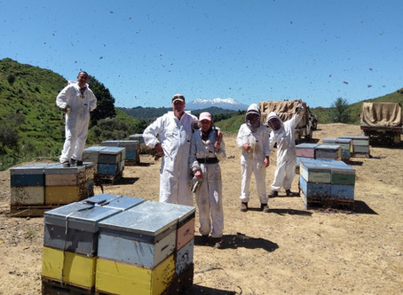 Turning a business into a thriving hive