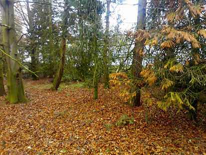 Saplings Wodland,Forest School, Henham