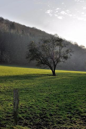 Landscape_in_Barvaux_during_winter.jpg