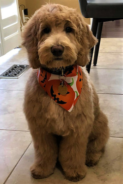 Rocky at 4 months