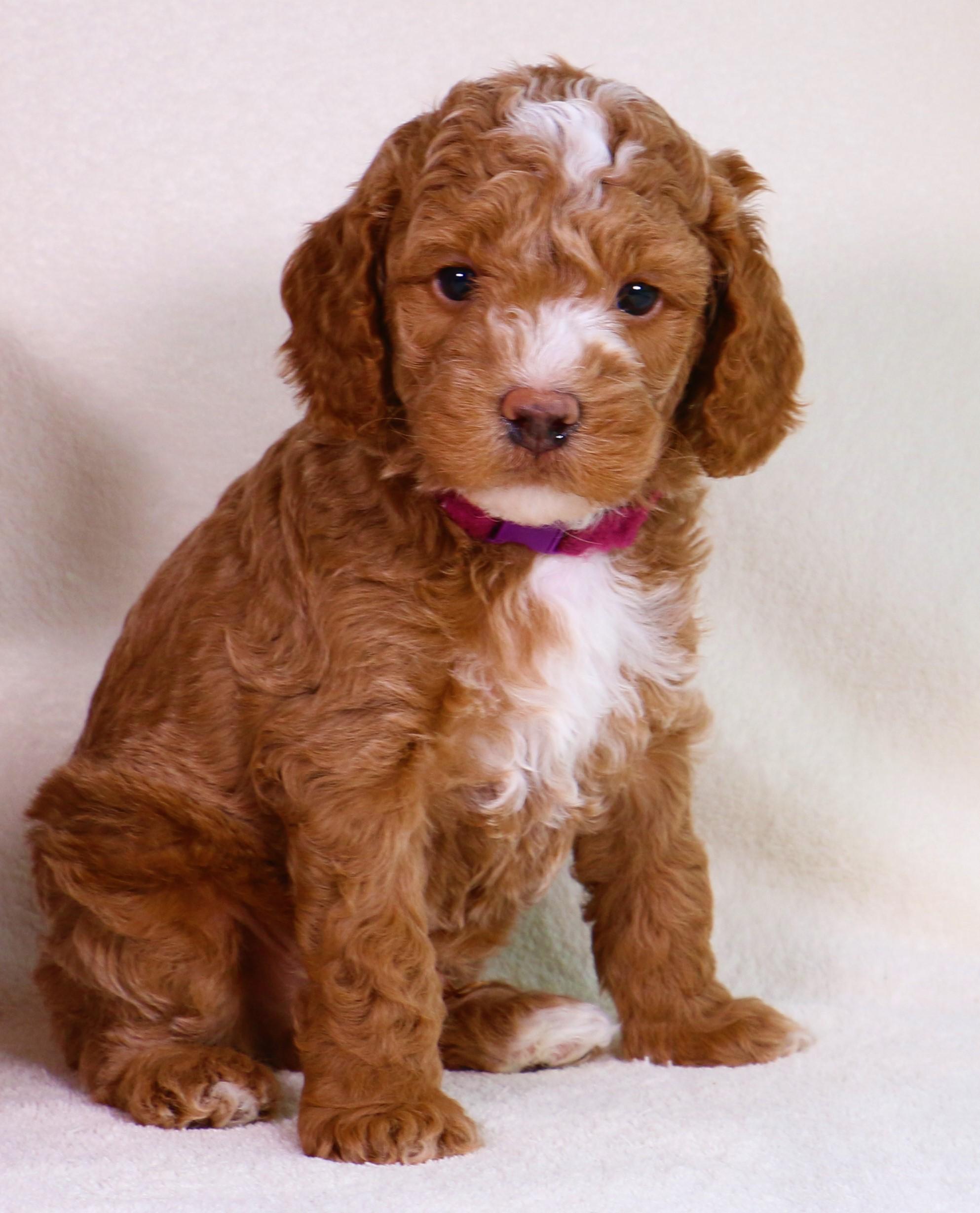 Benji at 6 weeks