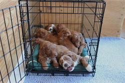 We love our crate