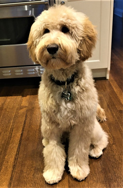 Hudson is 1 year old