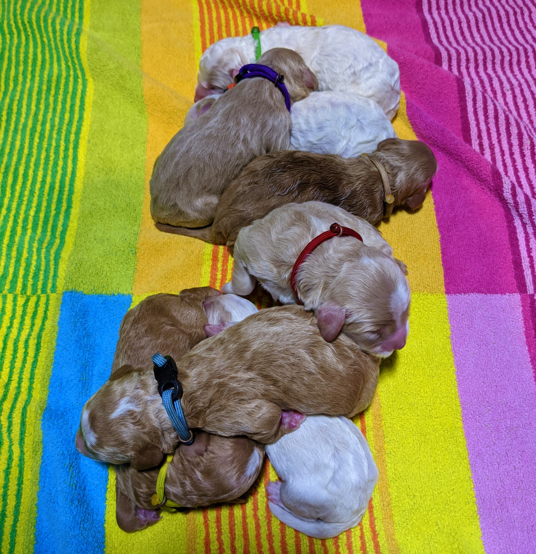 Winnie 8 newborns