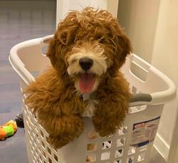 Samson is 4.5 months