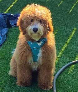 Samson is 6.5 months old