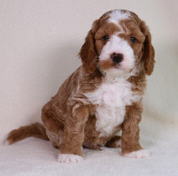 Ziggy at 6 weeks