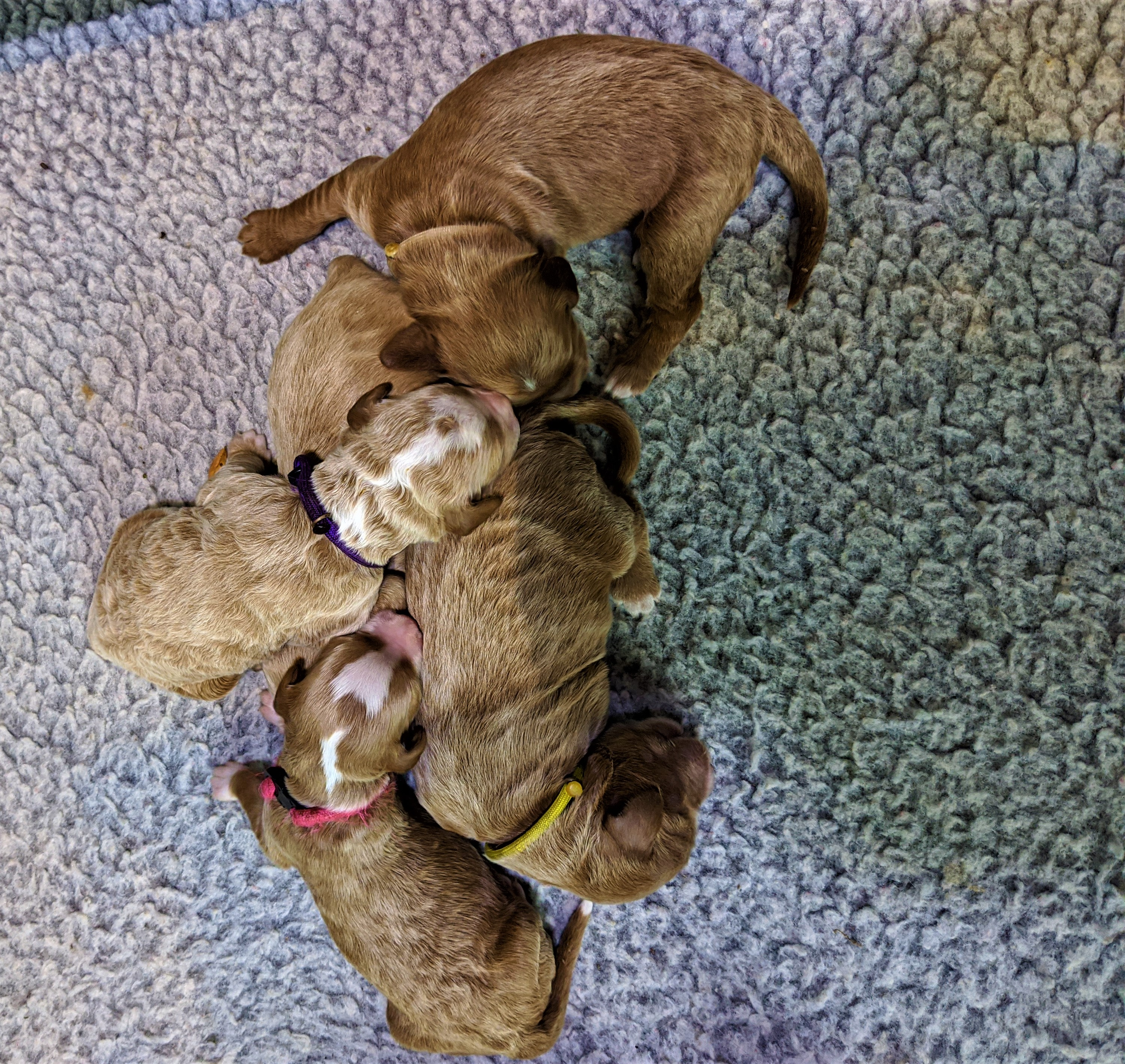 The Girls at 5 days old