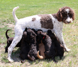 Vanna with her first litter