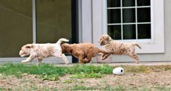 Dolly, Polly and Daisy