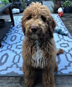 Obi is 5 months