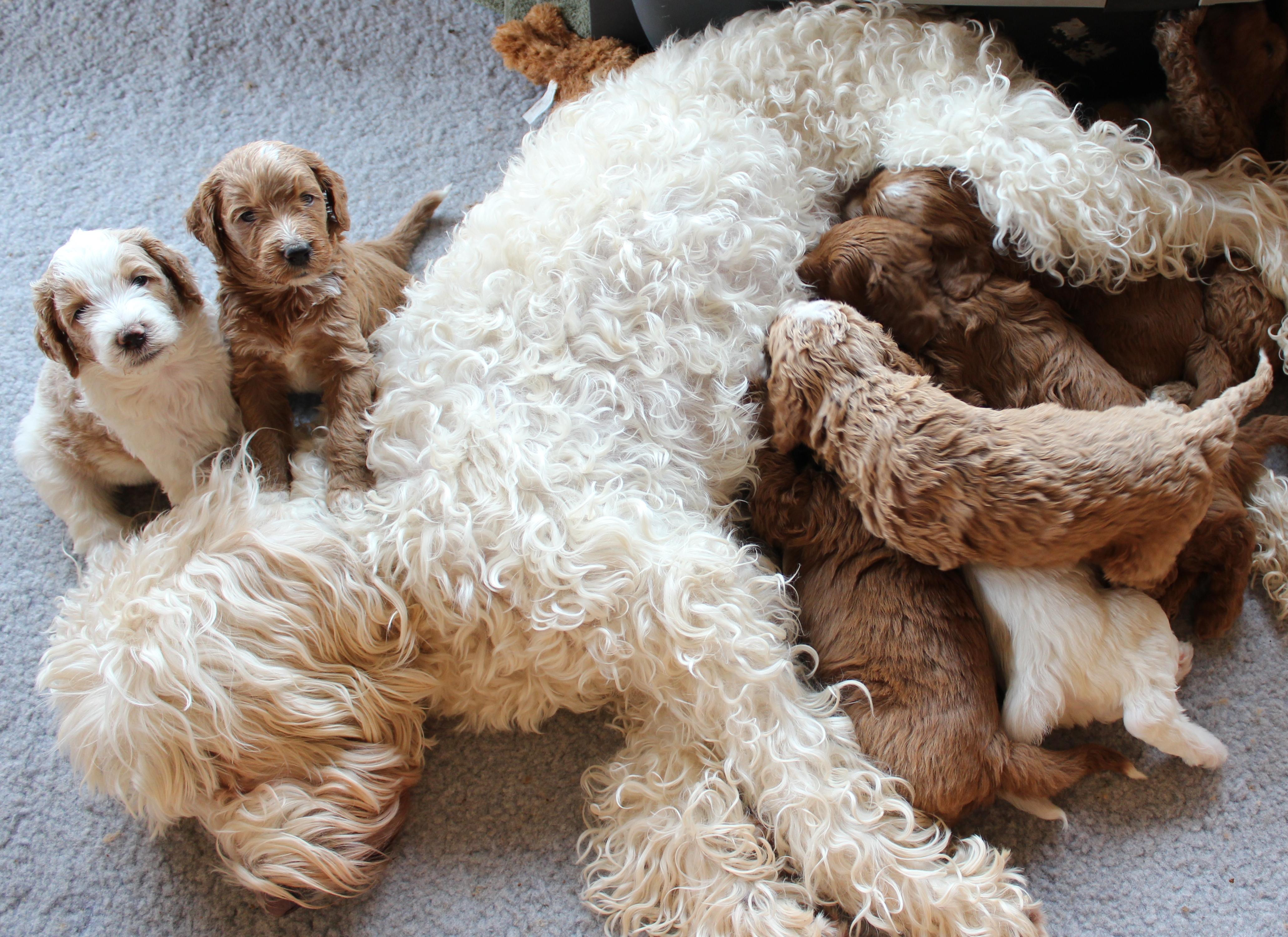 Sadie is in Jazzys puppy bin again