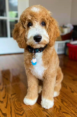 Cooper is 4.5 months old