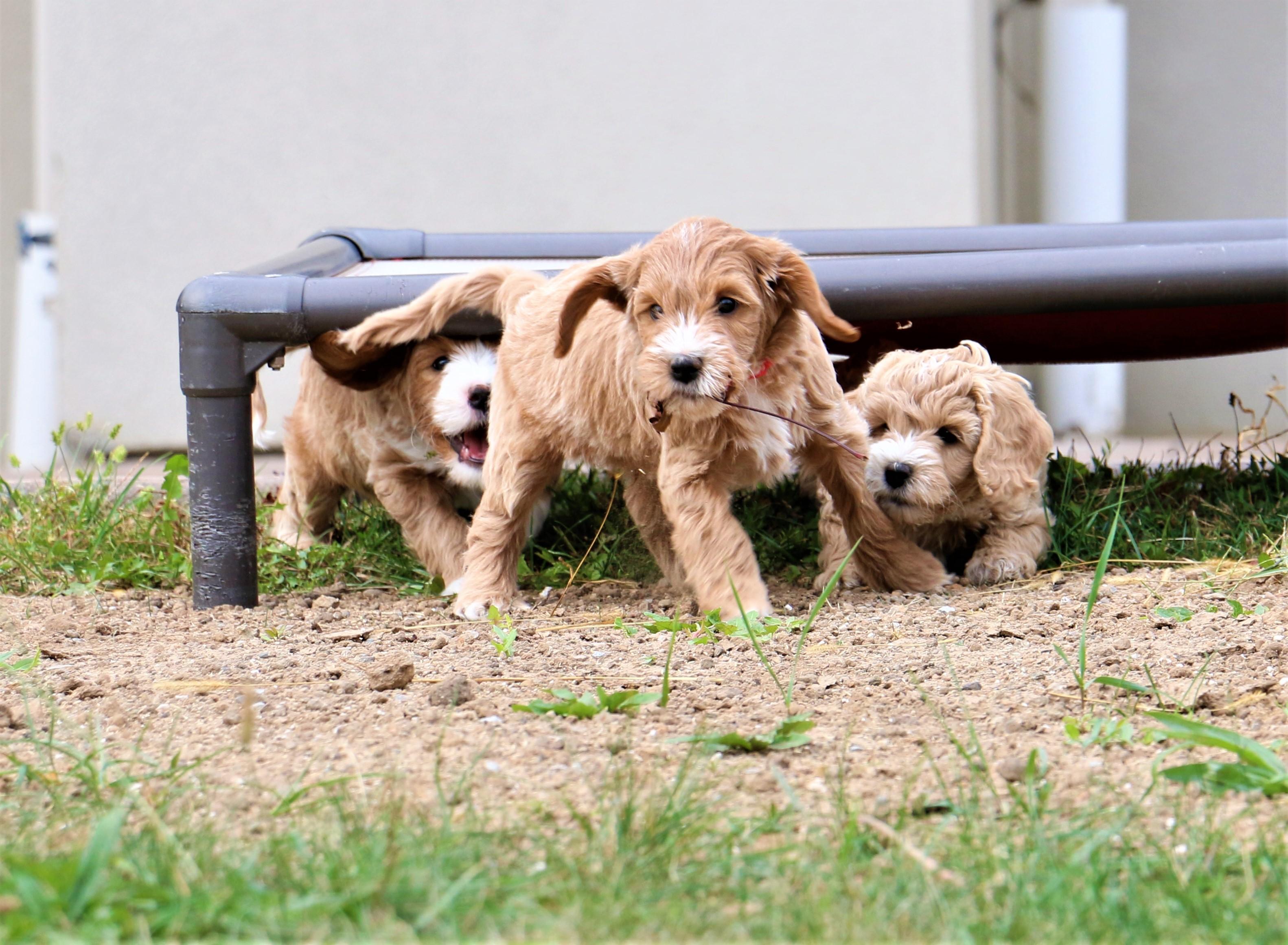 Wrigley, Teddy and Dolly