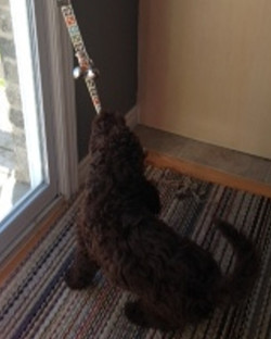 Quincy rings his bells to potty