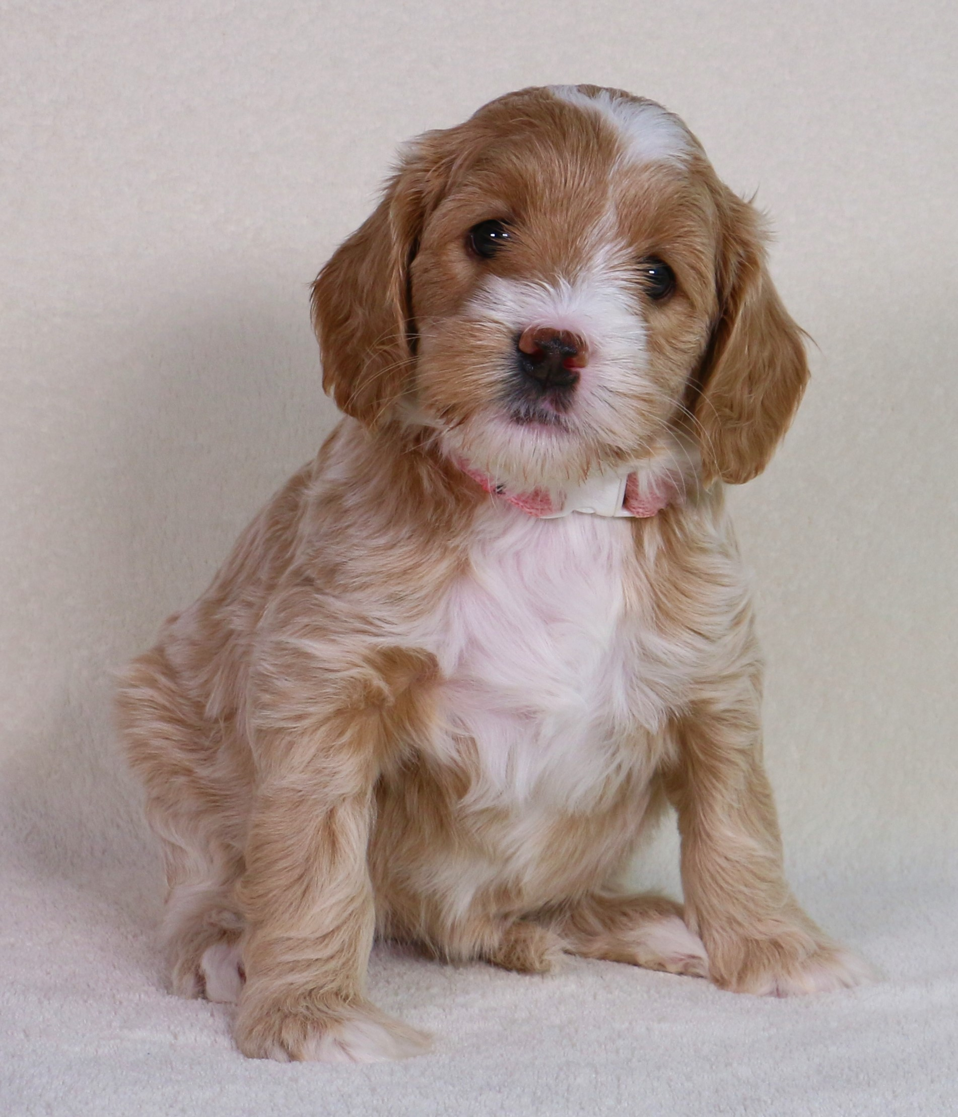 Mabel at 6 Weeks