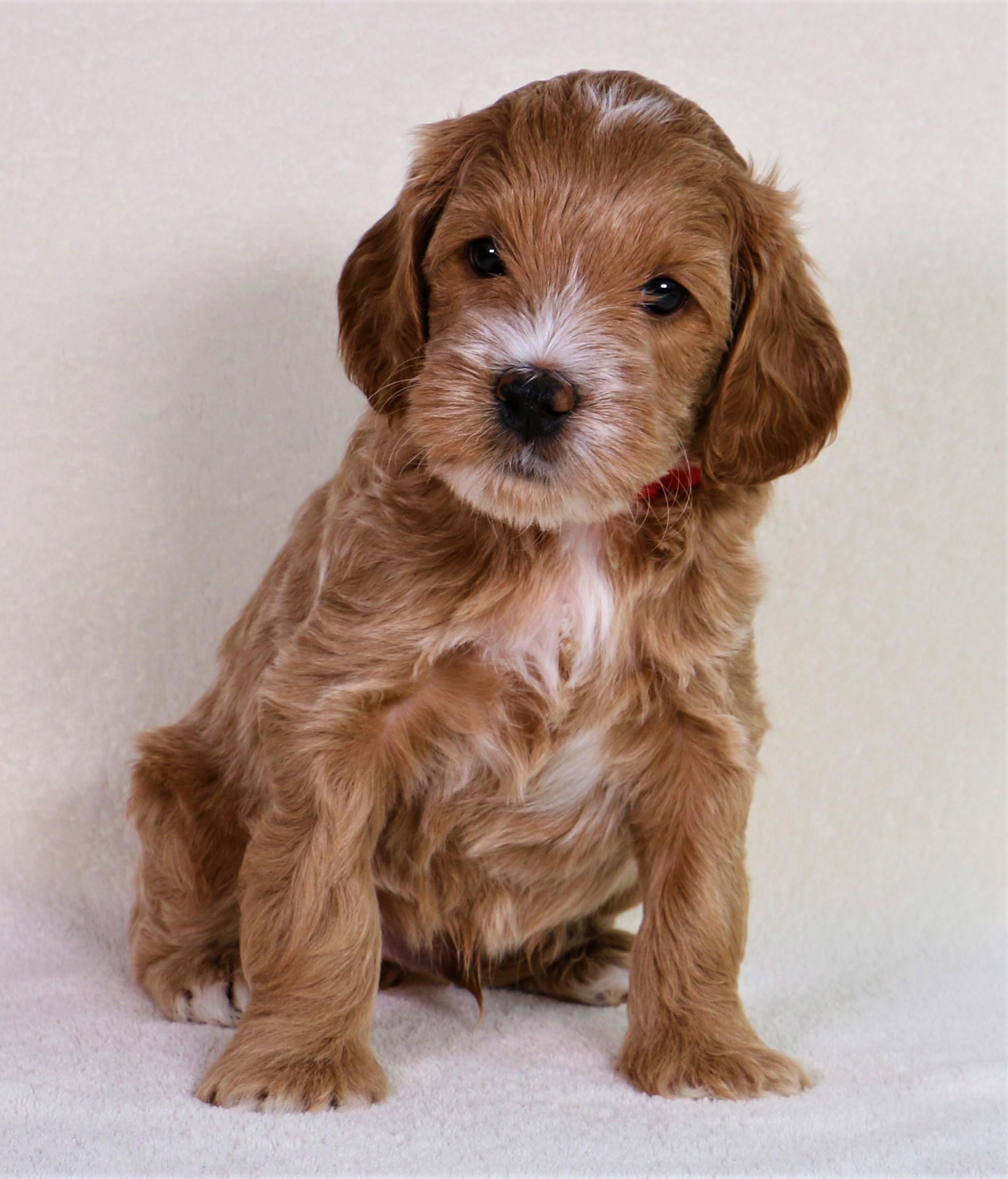 Teddy at 6 Weeks