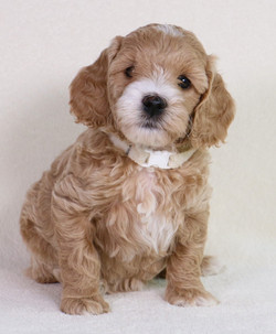 Dolly at 6 Weeks