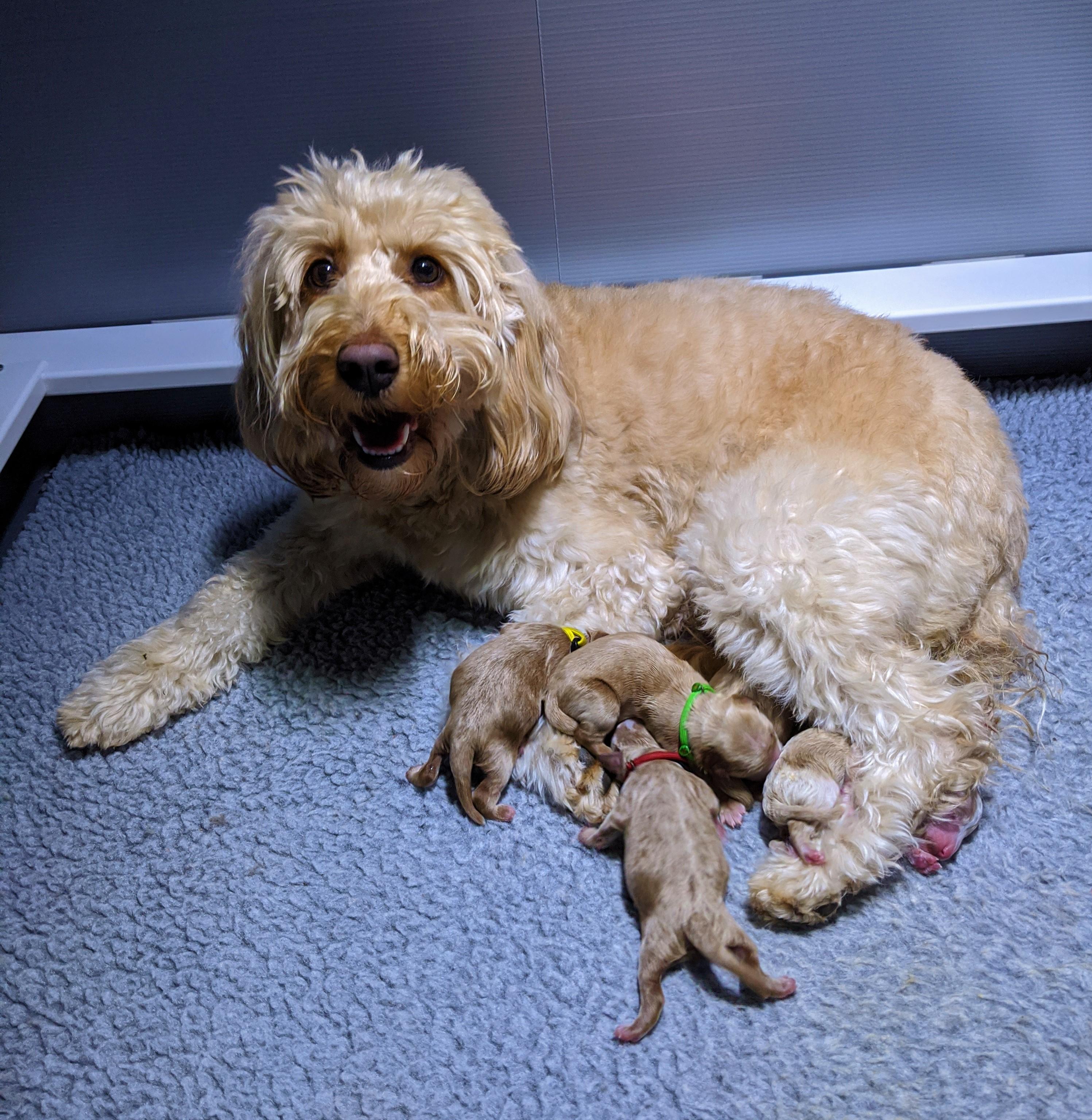 Willow and her 6 Newborns