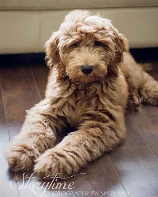 Canon Puppy
