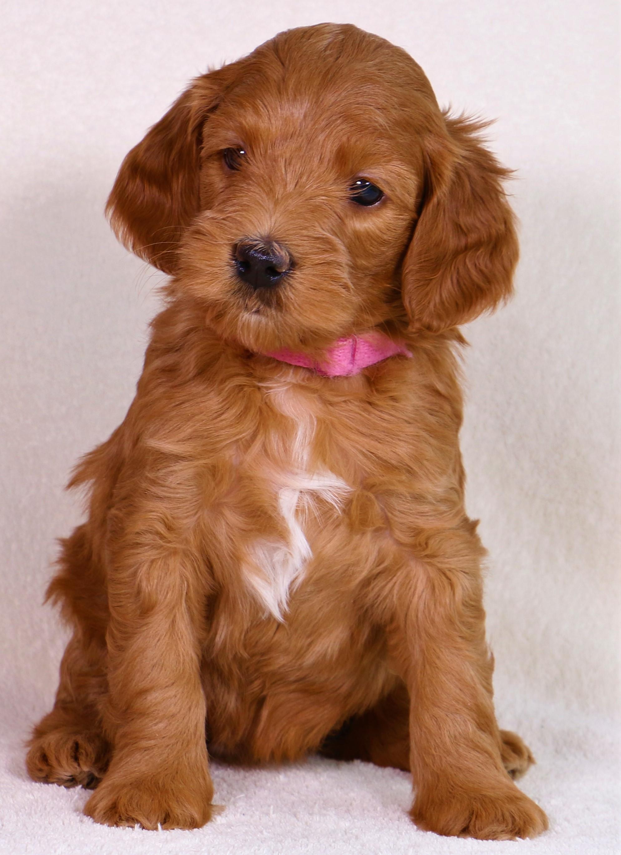 Ruby at 6 weeks